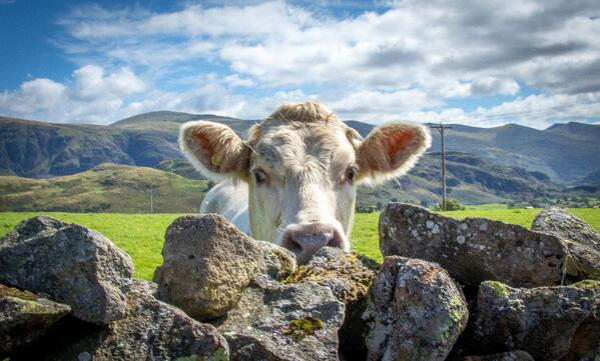 Lake District Property Management