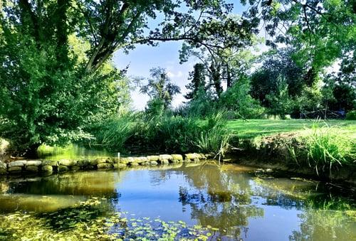 idyllic suffolk garden in summer