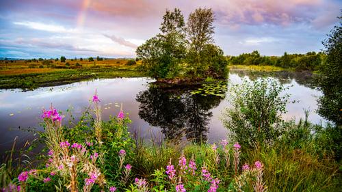 Beautiful lake in Tregaron